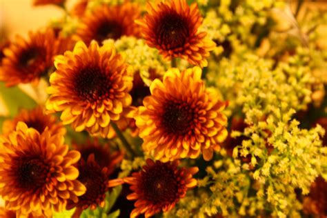 fall flowers in season mum s the word theeverydaykitchen