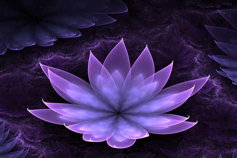 purple lotus purple lotus background 22567 1500x1000 px hdwallsource