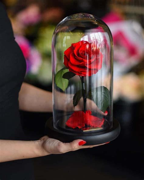 enchanted roses real enchanted rose lasts 3 years without water or sunlight