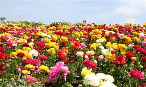 chiêm ngưỡng vẻ đẹp 12 cánh đồng hoa đẹp nhất thế giới