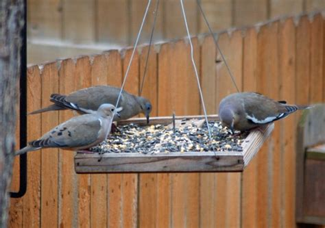 what i learned about my backyard from project feederwatch