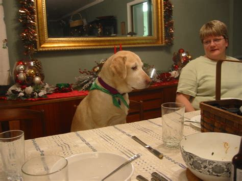 dogs at dinner table cheeky dogs and cats sitting at the dinner table just don