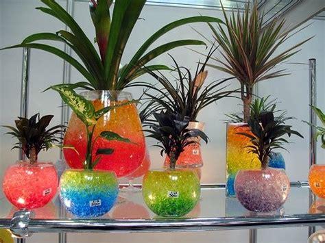 Pot Tanaman Hias Ukuran 30cm tips memilih dan merawat tanaman hias indoor bibitbunga