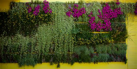 how to start a vertical garden sarner