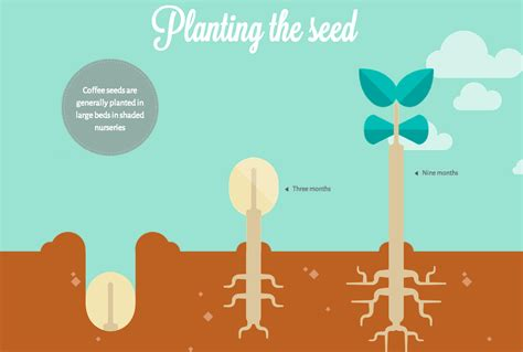 A Beautiful, Interactive Look At Your Coffee's Journey From Seed to Cup
