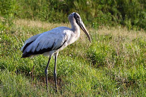 some florida target birds vermont birder