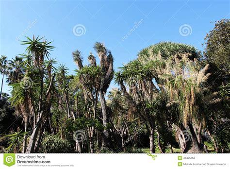 piante esotiche da giardino piante esotiche da giardino fiori giardino piante da