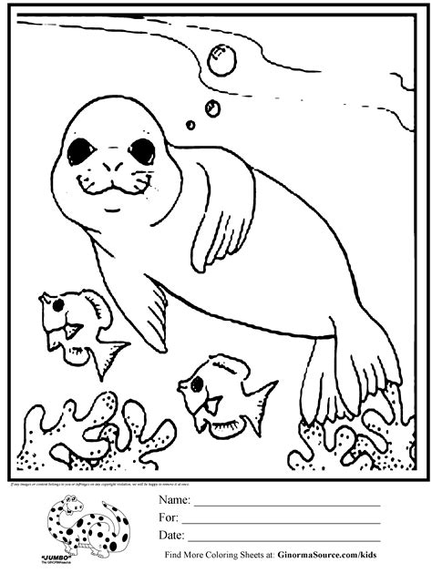 cute seal coloring pages coloring page seal swimming with fish coloring pages