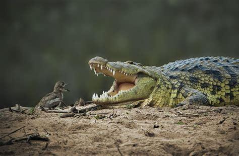 best wildlife photography best wildlife photography snaps