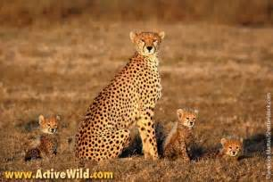 animal pictures african animals list with pictures facts information