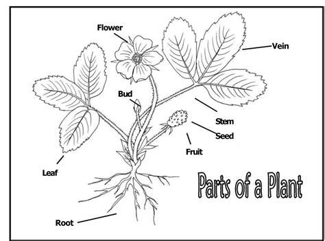 parts of a diagram diagrams of flower parts diagram site