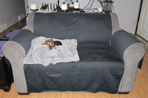 stop dog from getting on couch get dog hair off couch best cleaning tips for clean couch