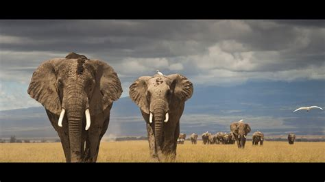 beautiful world  beauty  african wildlife marcus