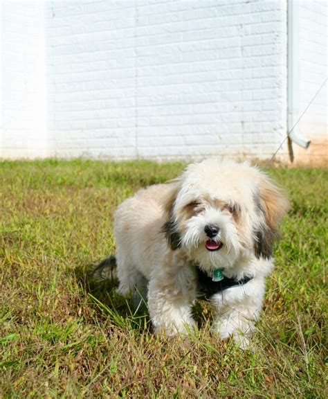 dreamy puppy dreamy puppy closed 17 photos 50 reviews pet services 14220 sullyfield cir