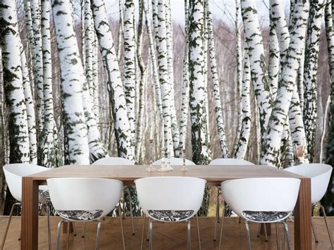 birch wall mural closer with nature in birch tree wall mural wallpaper