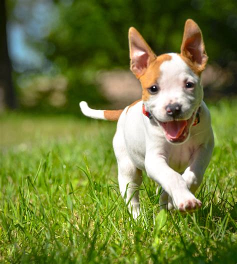 how to a puppy to be an outside secrets to puppy potty four muddy paws a self service wash and