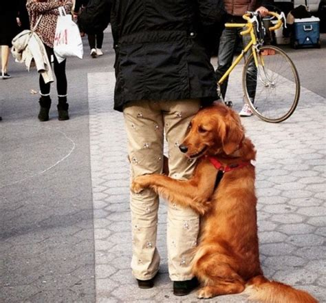 louboutin golden retriever this retriever is obsessed with giving hugs to everyone he meets
