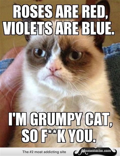 Best Grumpy Cat Meme - grumpy cat best meme ever memes