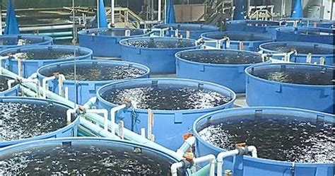 sle of a business plan on catfish farming fish farming how to exploit the rewarding potentials of