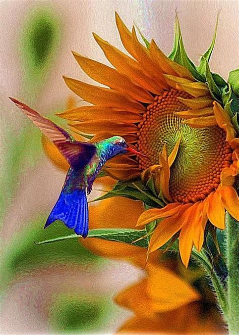 real hummingbird feathers for sale hummingbird on sunflower greeting card for sale by kolenberg technicolor nature