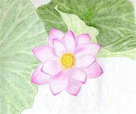 Drawing A Lotus Flower Drawings Of Flowers