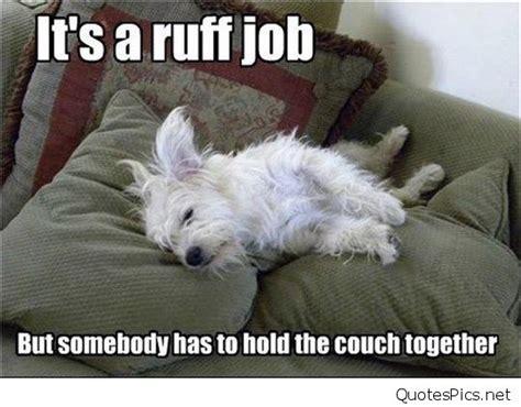 Funny Photos Memes - funny monday dog saying quotes memes photos