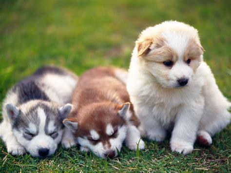 Download Wallpaper Anak Anjing   gambar wallpaper keren koleksi gambar anjing dan anak