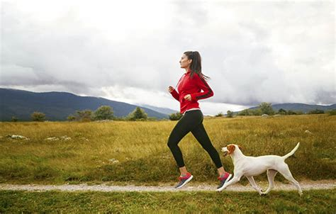 dogs to run with 17 paw fect dogs for runners active