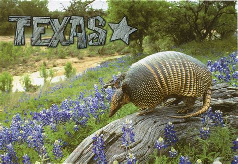 In Tx Usa Remembering Letters And Postcards