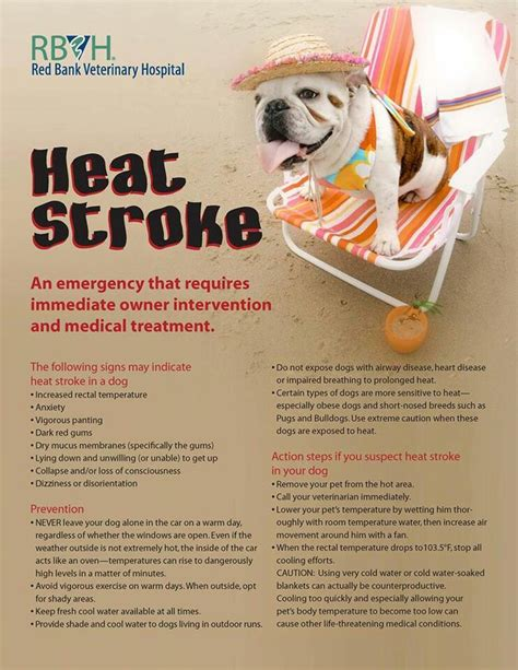 signs of heat stroke in dogs heat stroke in dogs all things are and free thoreau