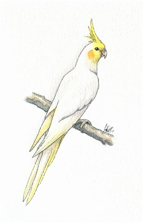 lutino cockatiel by joceweir on deviantart