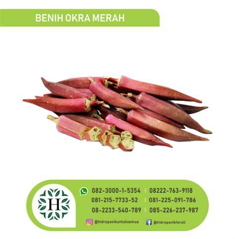 Benih Sayuran Okra benih sayuran buah okra merah jual alat bahan media