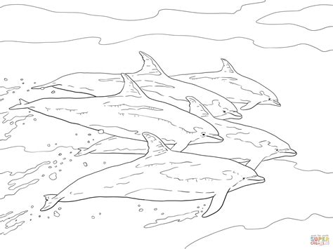 coloring page of bottlenose dolphin bottlenose dolphins coloring picture coloring page