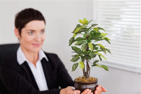 best plants for office virtual office greenery choosing the best plants for your