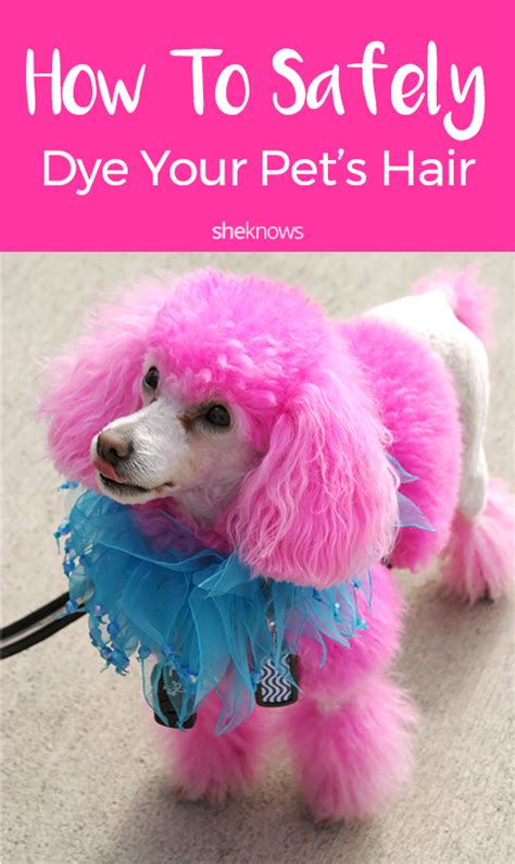 how to get dog hair off comforter if you re gonna dye your pet s fur a funky shade at least