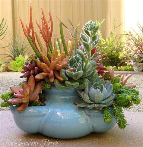 445 best succulent garden art images on pinterest