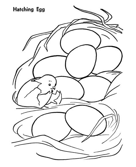 baby chicken coloring pages az coloring pages