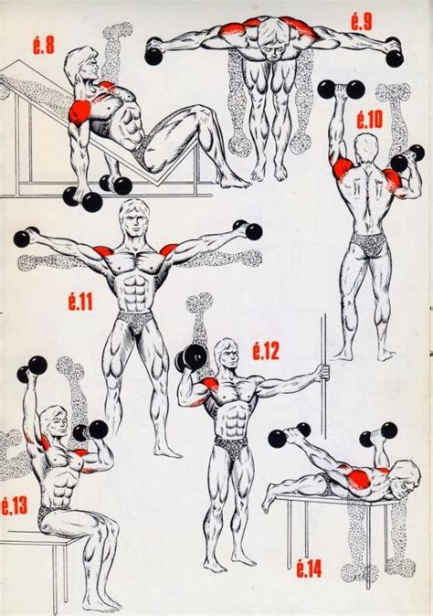 best 25 exercises for deltoids ideas on