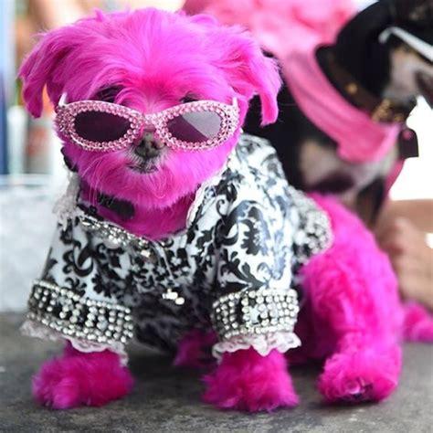 pink dogs pink frankie frankieagnello1