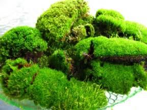 humble cub sippy cup moss terrariums