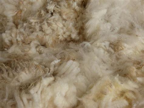schafwolle im garten ungewaschene schafwolle