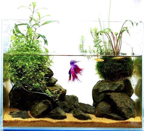 betta aquascape 25 best ideas about betta aquarium on pinterest betta