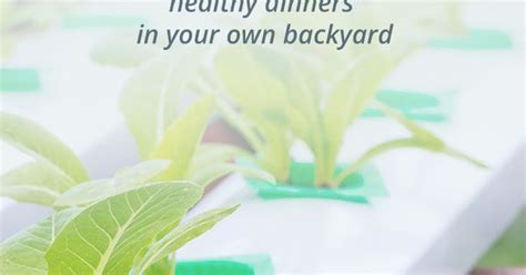 grow safe healthy fish and organic vegetables with no