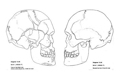 anatomy coloring pages skull free coloring pages of anatomy