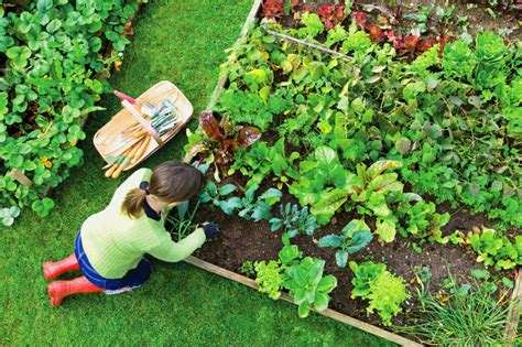 garden tips and design for herb enthusiasts