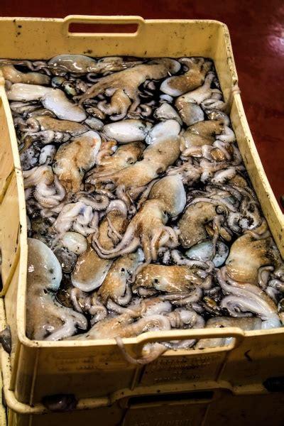 di commercio san benedetto tronto lory pesca commercio prodotti ittici san benedetto tronto