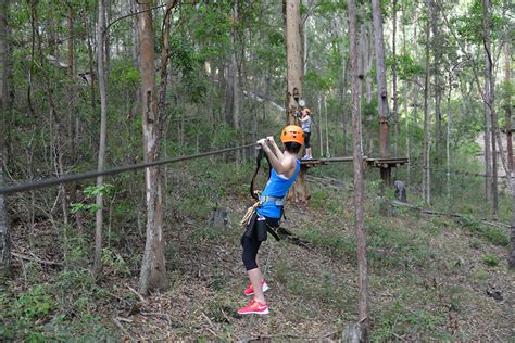 top challenge treetop challenge mt tamborine must do brisbane