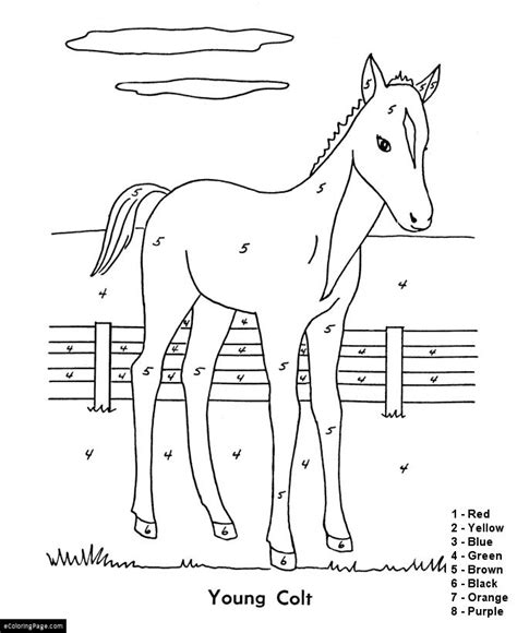 horse coloring pages by numbers color by numbers young colt horse coloring page for kids