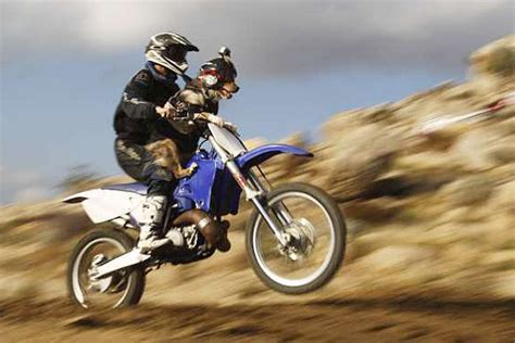 animal motocross dogs in extreme sports