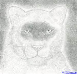 How to draw a panther apps directories